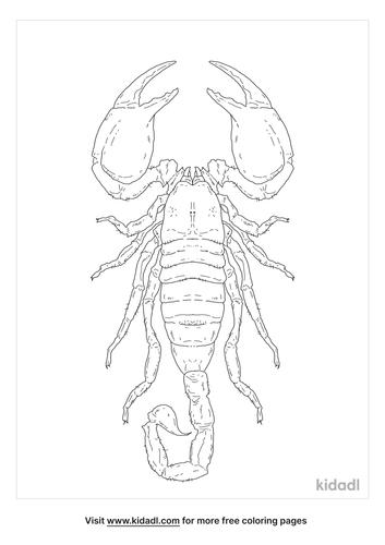 emperor-scorpion-coloring-page