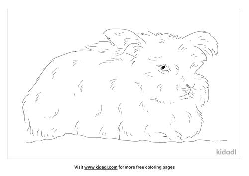 english-angora-rabbit-coloring-page