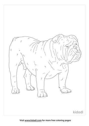 english-bulldog-coloring-page