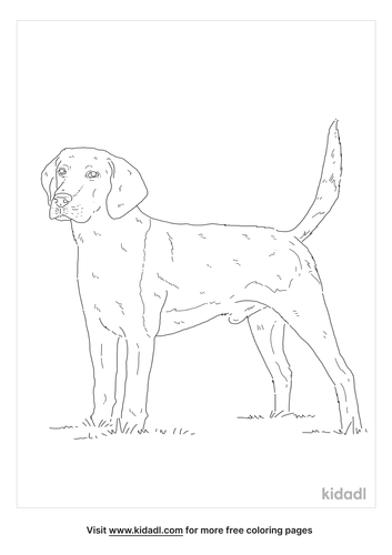 english-foxhound-coloring-page