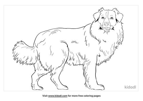 english-shepherd-coloring-page