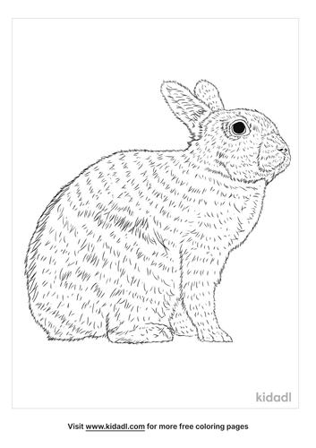 english-spot-rabbit-coloring-page