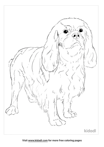 english-toy-spaniel-coloring-page