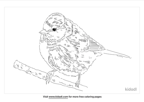 eurasian-blue-tit-coloring-page