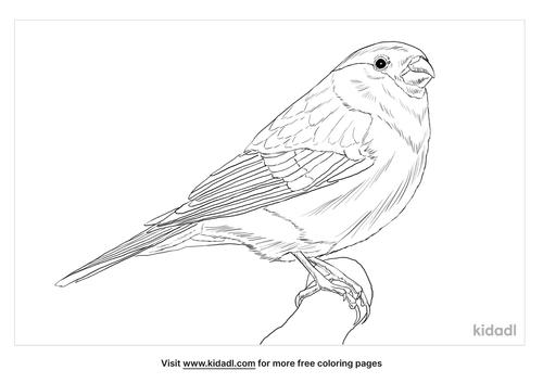 eurasian-bullfinch-coloring-page