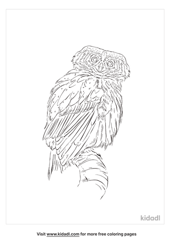 eurasian-pygmy-owl-coloring-page
