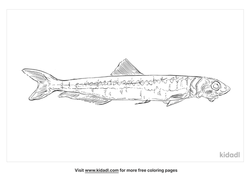 european-anchovy-coloring-page