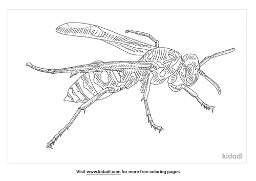 european-paper-wasp-coloring-page