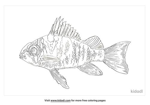european-perch-coloring-page