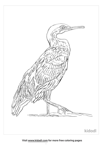 european-shag-coloring-page