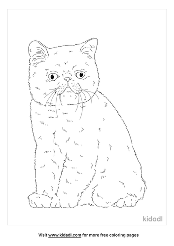 exotic-shorthair-coloring-page