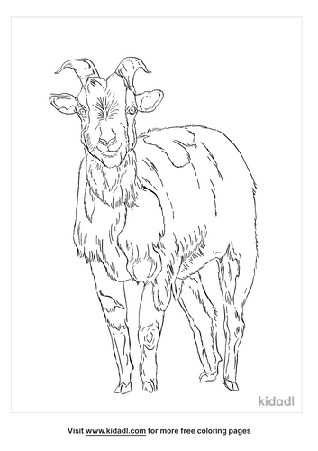 fainting-goat-coloring-page