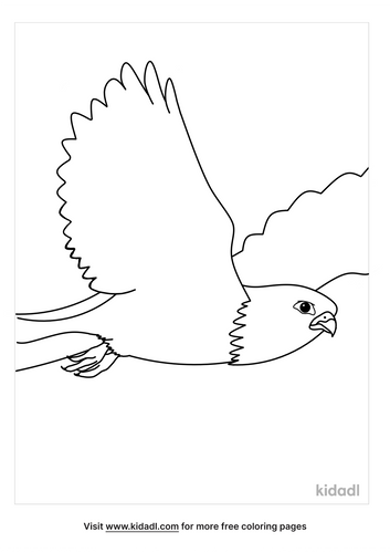 falcon-coloring-pages-2-lg.png