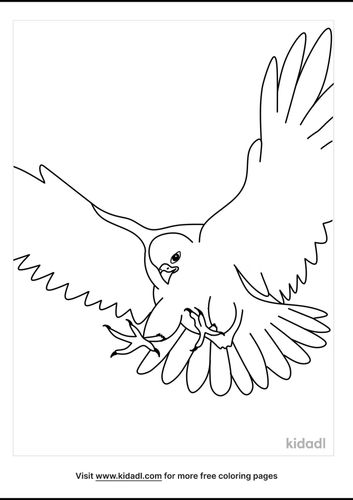 falcon-coloring-pages-3-lg.png