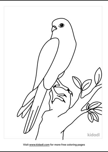 falcon-coloring-pages-4-lg.png