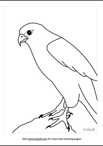 falcon-coloring-pages-5-lg.png