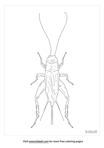 field-cricket-coloring-page
