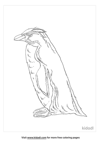 fiordland-crested-penguin-coloring-page