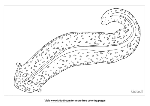 flatworms-coloring-page