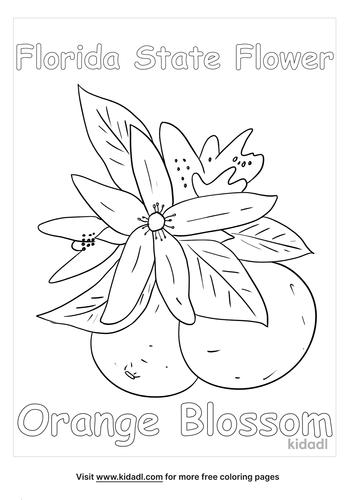 florida state flower coloring page_lg.png