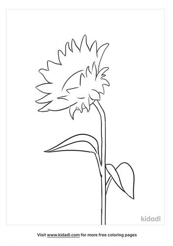 flower outline-3-lg.png