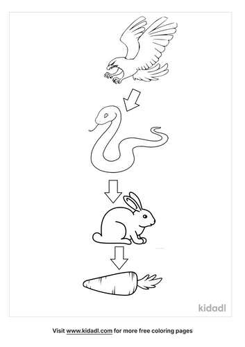 food-chain-coloring-pages-2-lg.png