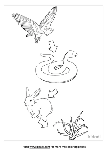 food-chain-coloring-pages-3-lg.png