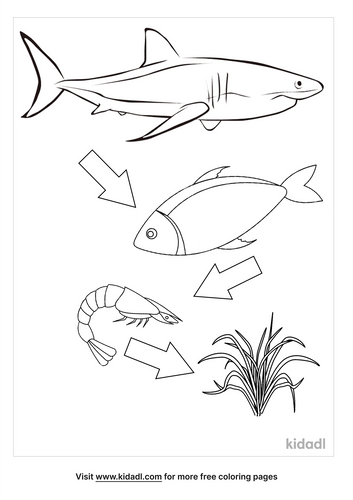 food-chain-coloring-pages-5-lg.png