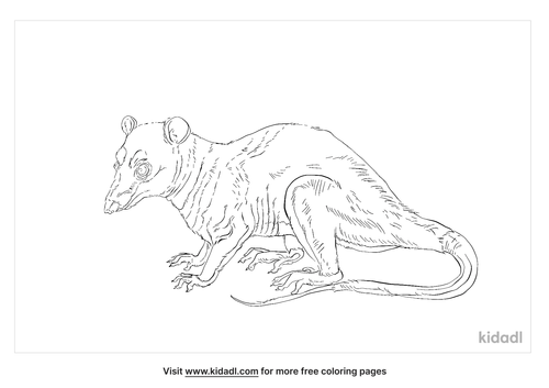 four-eyed-opossum-coloring-page