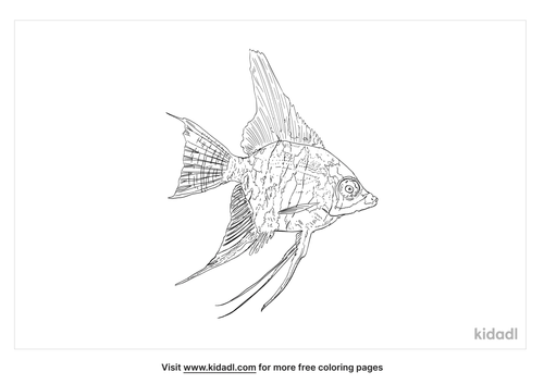 freshwater-angelfish-coloring-page