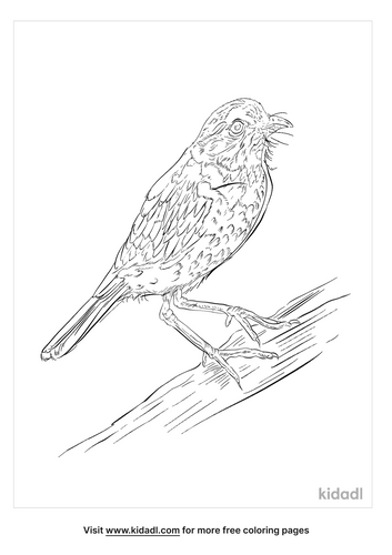 galapagos-flycatcher-coloring-page