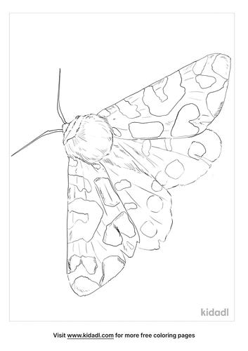 garden-tiger-moth-coloring-page