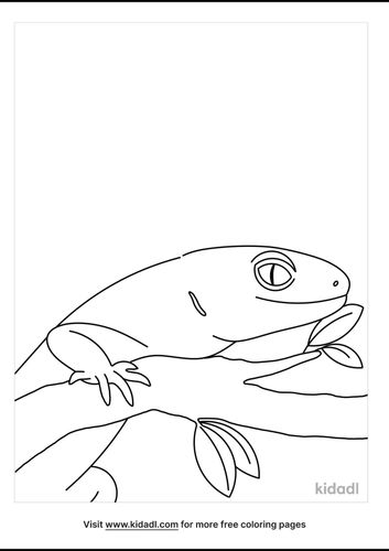 gecko-coloring-pages-3-lg.png