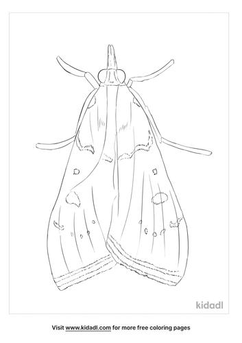 genista-broom-moth-coloring-page