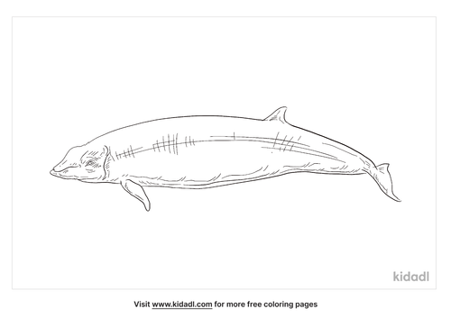 gervais-beaked-whale-coloring-page