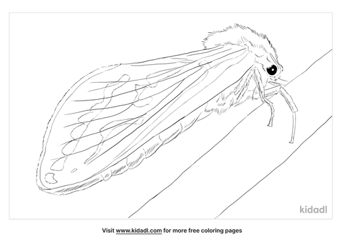 ghost-moth-coloring-page