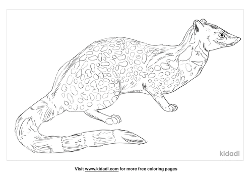 giant-forest-genet-coloring-page