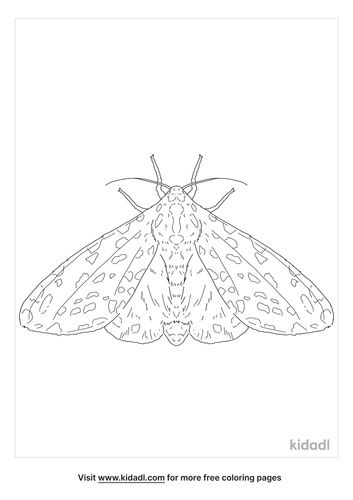 giant-leopard-moth-coloring-page