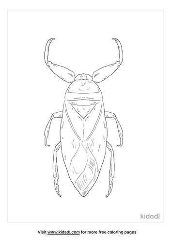 giant-water-bug-coloring-page