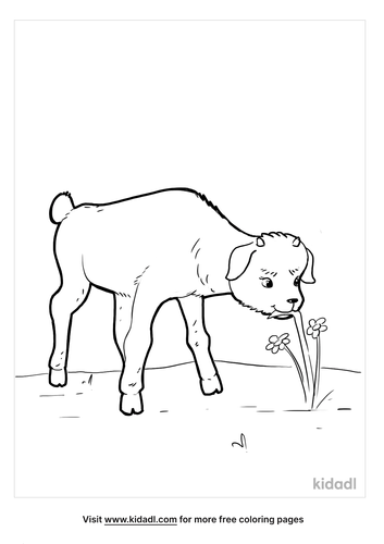 goat coloring pages_4_lg.png