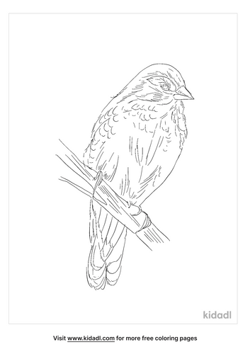 gold-breasted-waxbill-coloring-page