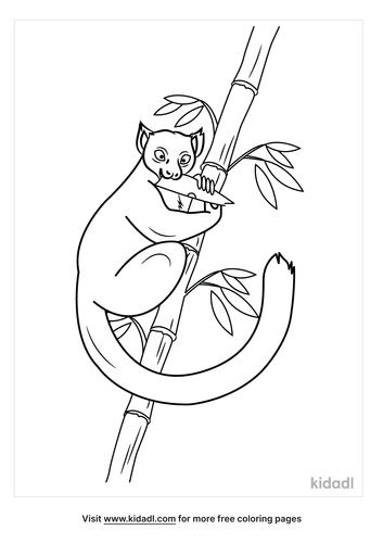 golden-bamboo-lemur-coloring-pages.png