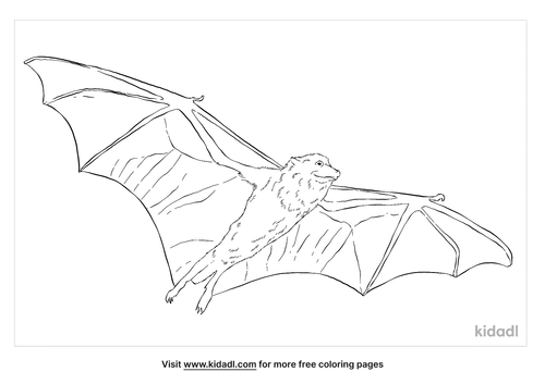 golden-crowned-flying-fox-coloring-page