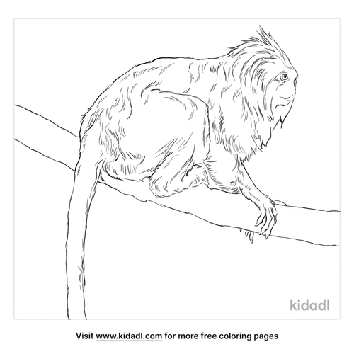 golden-headed-lion-tamarin-coloring-page