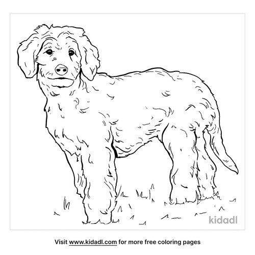 goldendoodle-coloring-page