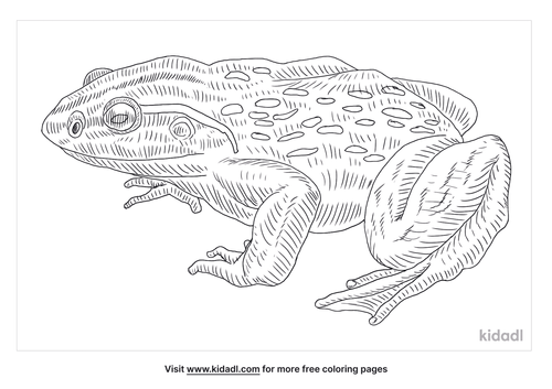 goliath-frog-coloring-page