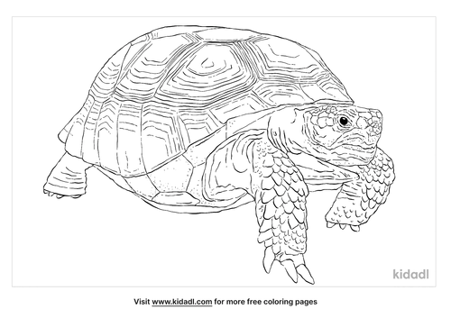 gopher-tortoise-coloring-page