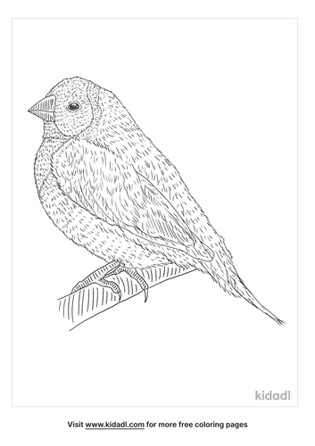 gouldian-finch-coloring-page