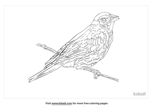grassquit-coloring-page