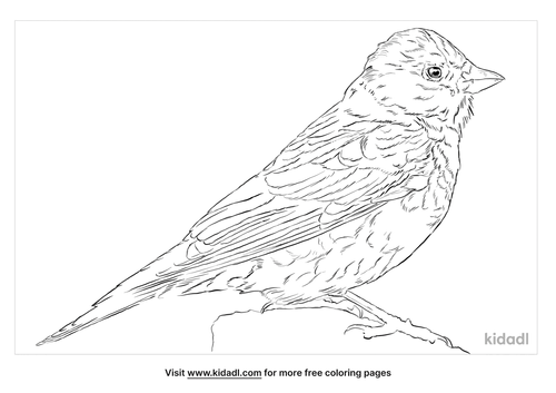 gray-crowned-rosy-finch-coloring-page